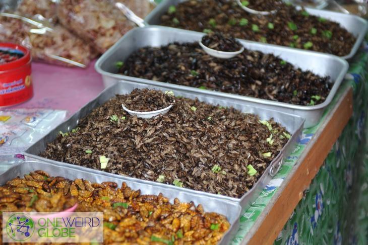 Jungle Market