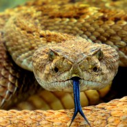Dear Nature Enthusiasts & Outdoor Travelers: How to Protect Yourself From Snakebite Overseas