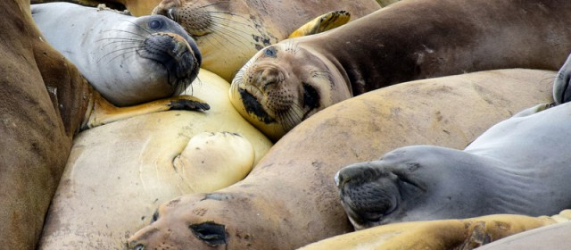 Snapshot From the Road: Elephant Seal Rookery, California.