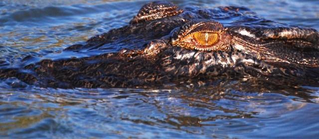 A Field Guide to Australia's Deadliest Creatures
