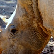 Game Watching Adventures in South Africa's Zululand Rhino Reserve