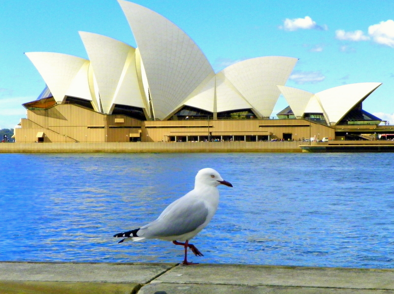 Walking around the Circular Quay area will give you plenty of opportunities to take photos of the Opera House.