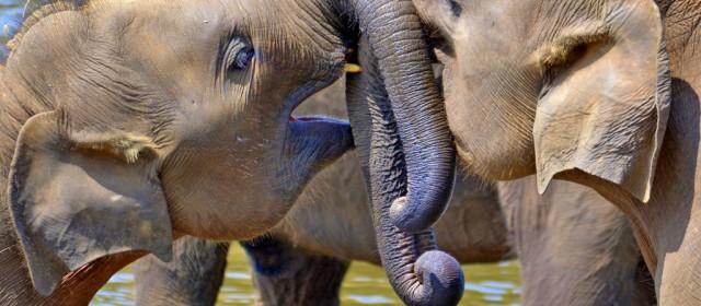 5 Reasons You Should Travel to Sri Lanka