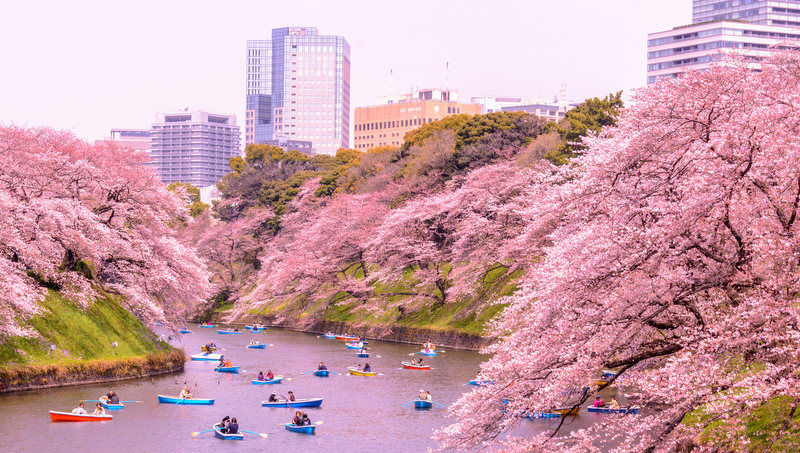 How to Plan a Cherry Blossoms Trip to Japan - Mapping Megan