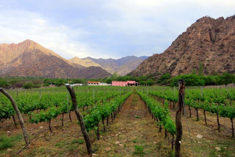 Vineyards in Cafayate