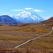 The Denali Experience is All a Matter of Luck