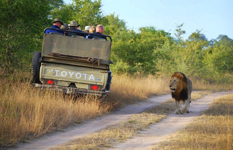 Africa Safari