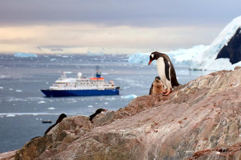 Cuverville Island, Antarctica.