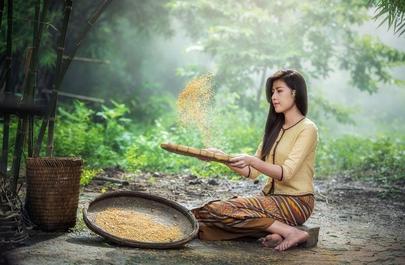 Rice in Asia RF