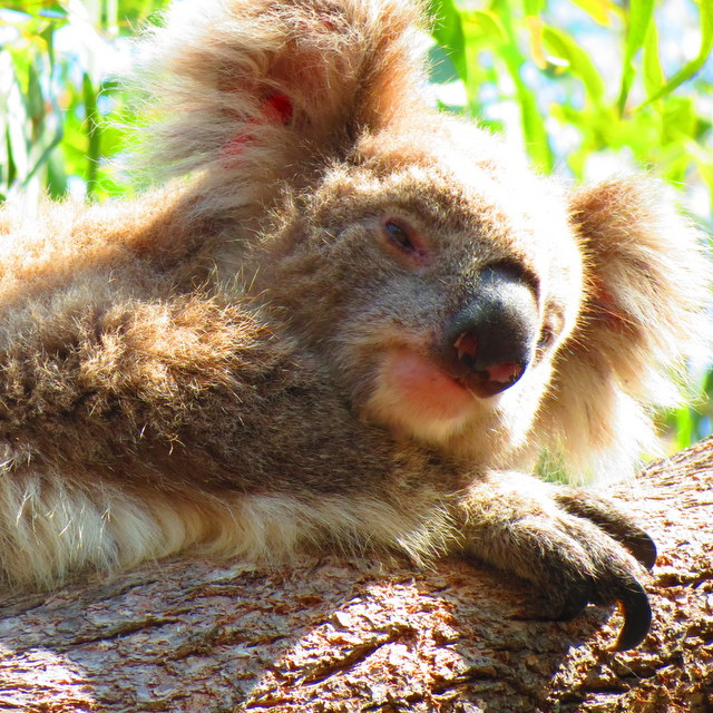 Phillip Island Wildlife Tour: Day Trip From Melbourne Booked via TripVerse