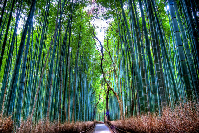 It is a beautiful forest with a path through its heart. It is located right beside Tenryuji, a world heritage Zen Temple.