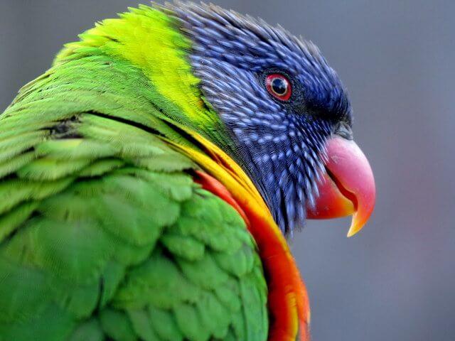 Australian birdlife