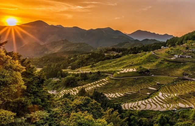 Japan landscape rice terrace RF
