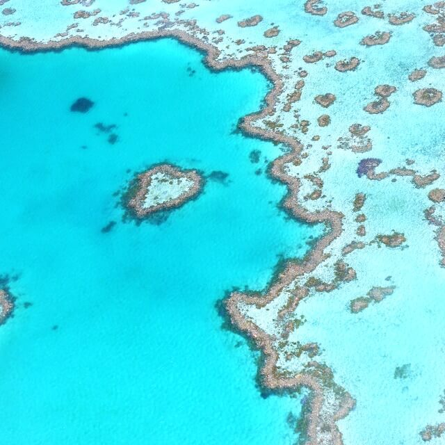Explore the Beauty of Coral Reefs in 5 Unique Trips - Mapping Megan