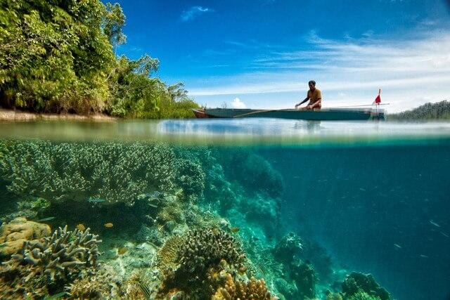 Sea coral reef RF