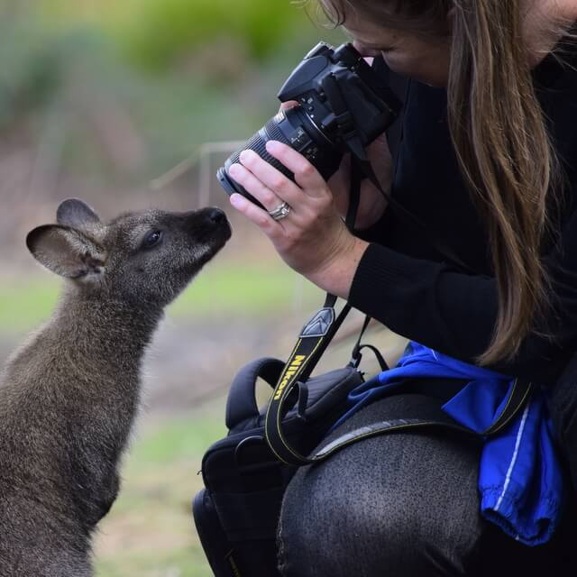 How Wildlife Photographers are Building Their Personal Brand Online
