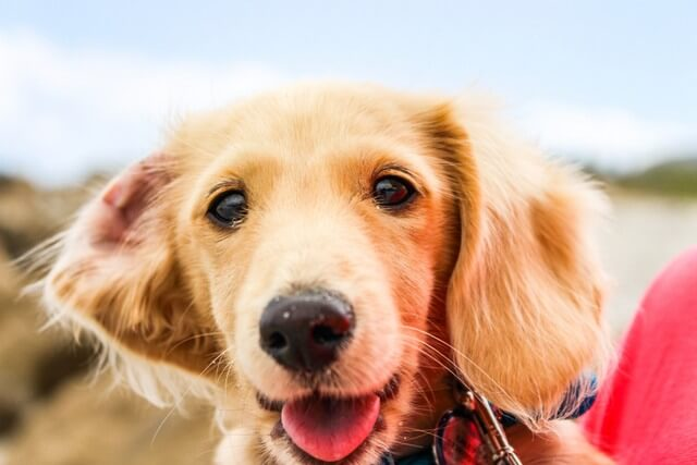Pet Friendly Destinations To Visit In California Mapping Megan