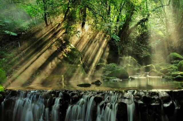 Rainforest RF