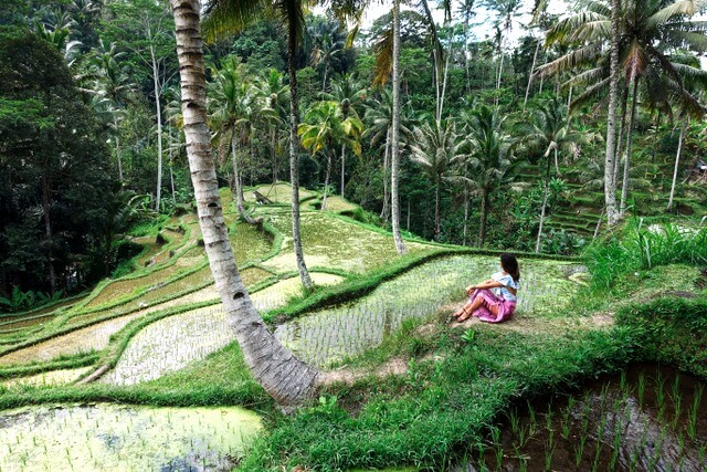 Rice fields Bali RF