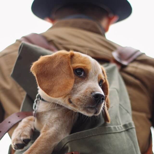 Everything You Need to Know About Traveling with an Emotional Support Animal