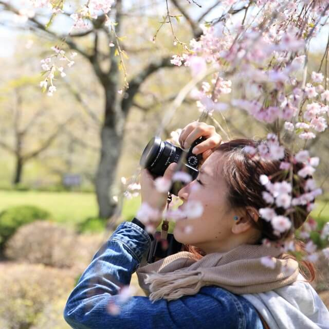 Why You Need to Visit Kyoto During Cherry Blossom Season