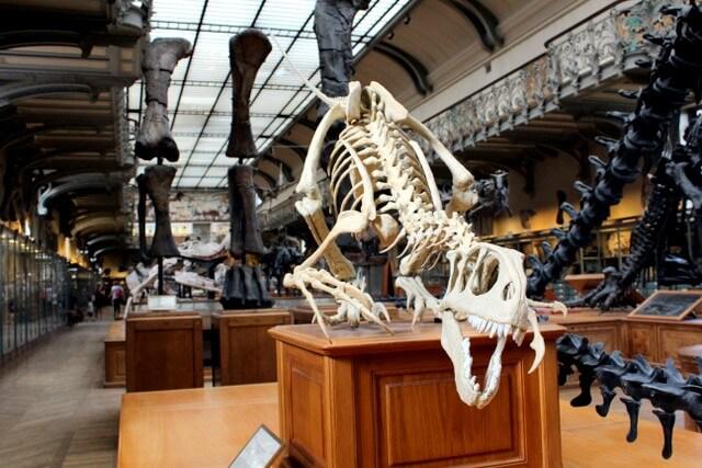 Skeleton museum RF
