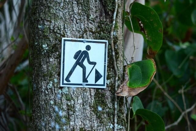 Byron Bay Rainforest walk trail hike