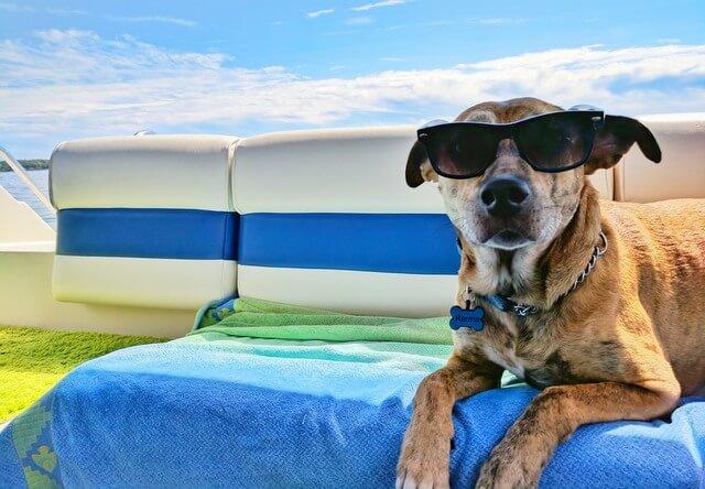 Pet dog animal boat RF