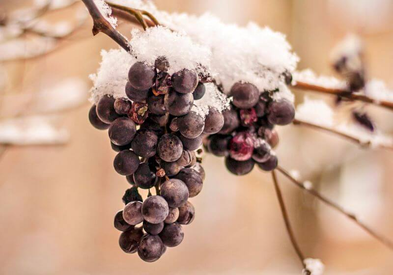 Wine Regions in the USA and Canada: Cheers to North American Wine!